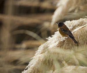 Explora Conservation Reserves Desert and Altiplano